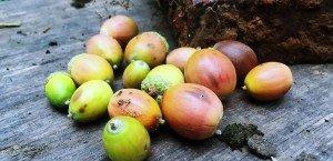 acorns-blog